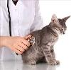 Ветеринарные клиники в Сухиничах